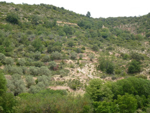 Connectivity out of control in abandoned olive groves by Manuel López-Vicente